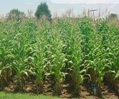 Greenhouse Fertilizer Screening Tests and On-Site Fertilizer Field Trials
